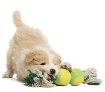 puppy training guelph