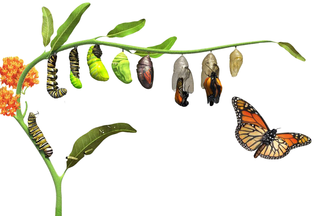 DK_butterfly_Lifecycle_Rev05_affmr0_edit