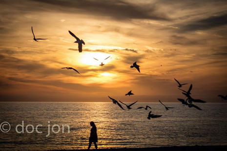 Bird silhouettes in the sunset._SIGMA 24