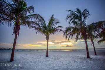 beachpalms-2.jpg