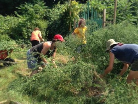 """Flash Volunteer"" effort at Noank School Public Gardens pays off"