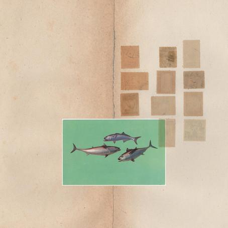 🎵 NEW RELEASE - William Cashion - Postcard Music Remixes