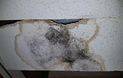 Black Mould Drop Ceiling Tile.jpg