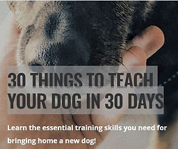 30 thing to teach your dog in 30 days.JP