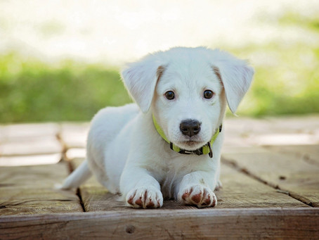 How to select the right puppy in 4 steps?