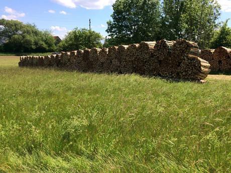Holzlager Dietikon (2).jpg