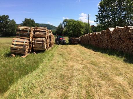 Holzlager Dietikon (3).jpg