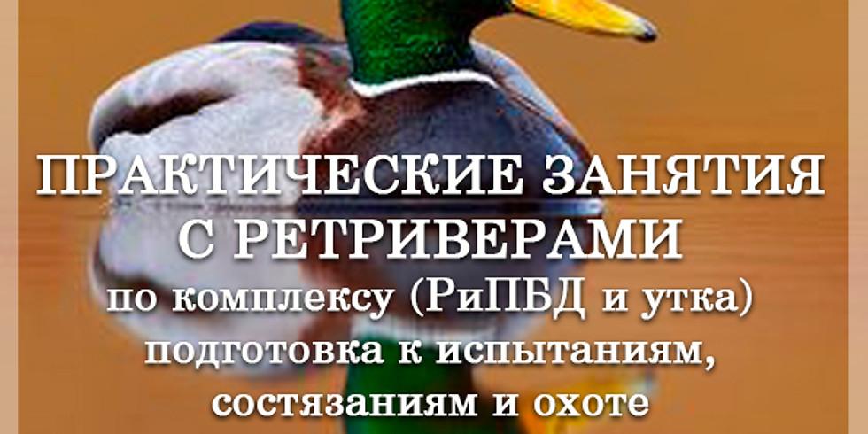 Натаска ретриверов по РиПБД + по утке