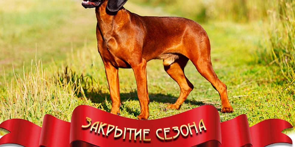 Cертификатные состязания охотничьих собак ранга САСТ по кровяному следу