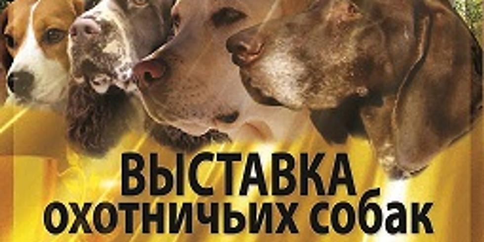 Выставка охотничьих собак с бонитировкой