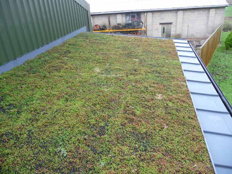 Single ply green roof system