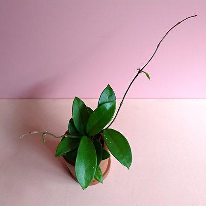 flor de cera no vaso barro pp