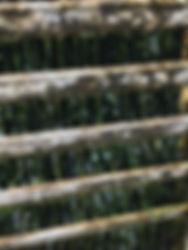 クーリングタワー|藻