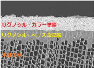 Lignosil Color Cross Section of Penetrat