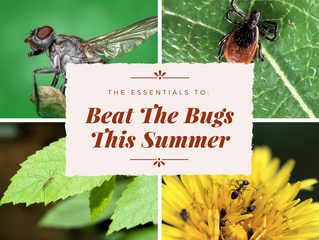 Beat The Bugs This Summer!