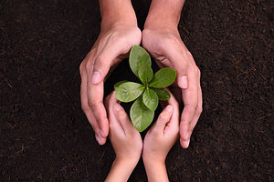 Ochrana-rastlin-bacaro.jpg