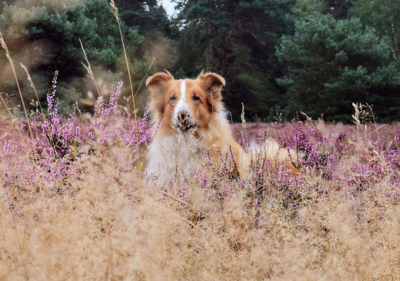 Tierschutzhund & Hibbelbombe