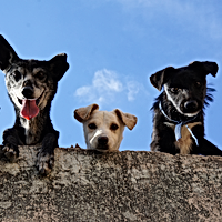 black-and-white-short-coated-dogs-362810