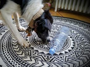 Les jeux à la maison avec son chien