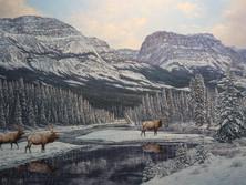 "'Bow River Elk' - 30""x 48"" - Oil. SOLD."