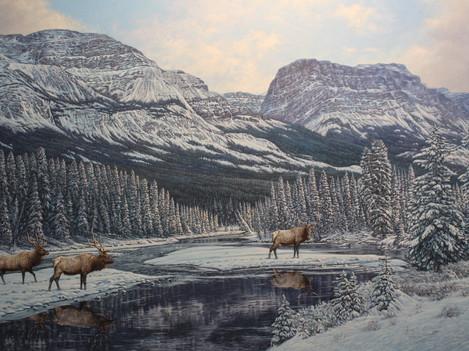 "'Bow River Elk' - 30""x 40"" - Oil. SOLD."