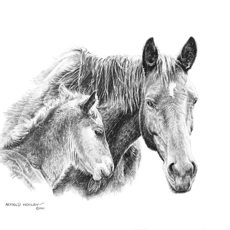 "'Mare and Colt' - 22""x 30"" - Graphite. SOLD."