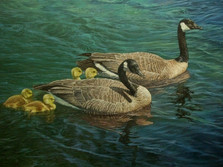 """'Two By Two - Canada Geese' - 24""""x 36"""" - Acryllic. SOLD."""