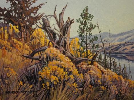 "'Aspen and Sage - Nicola Lake' - 8""x 10"" - Oil. SOLD."