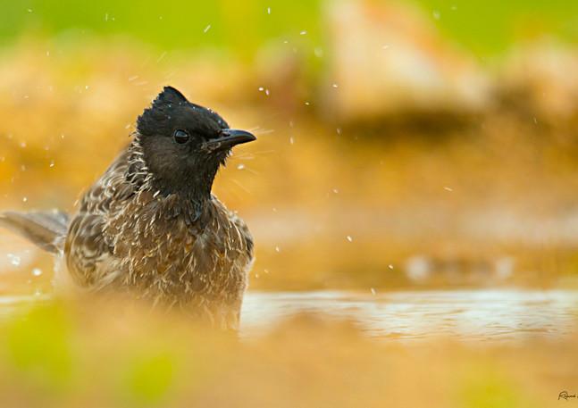 #birds #birdsofinstagram #ornithology #wildlife #naturephotography #animals #photography #wildlifephotography #birdphotography #birdwatching #birding #photooftheday #naturelovers #birdlife #birdstagram #wildlifephotography #nationalgeographic #birdhunter #theworldshotz #natgeoyourshot #raghuvamshchavali #pictureoftheday #yourshotphotographer #best_birds_of_world #best_birds_of_ig #birdsonearth #birdphotographersofindia #earthcapture  @natgeo @oneeyeland @natgeoyourshot @wildbirdtrust @sonybbcearth @audubonsociety @team_ebird @cornellbirds @animalplanet @discovery @discoverychannelin @naturyst @best_birds_of_world @best_birds_of_ig @best_birds_planet @best_wild_planet @birdsonearth @telanganatoday