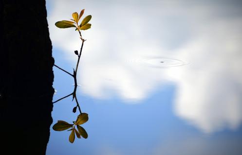 Beauty of Reflection