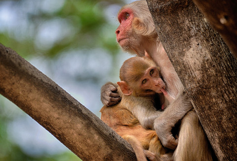 Mother`s Love & Protection