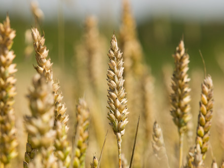 LiveWheat Plot Trials Meeting - July 14th