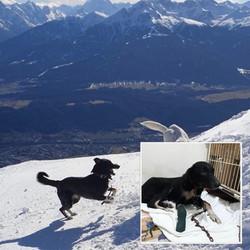 Baxter - Innsbruck, Austria