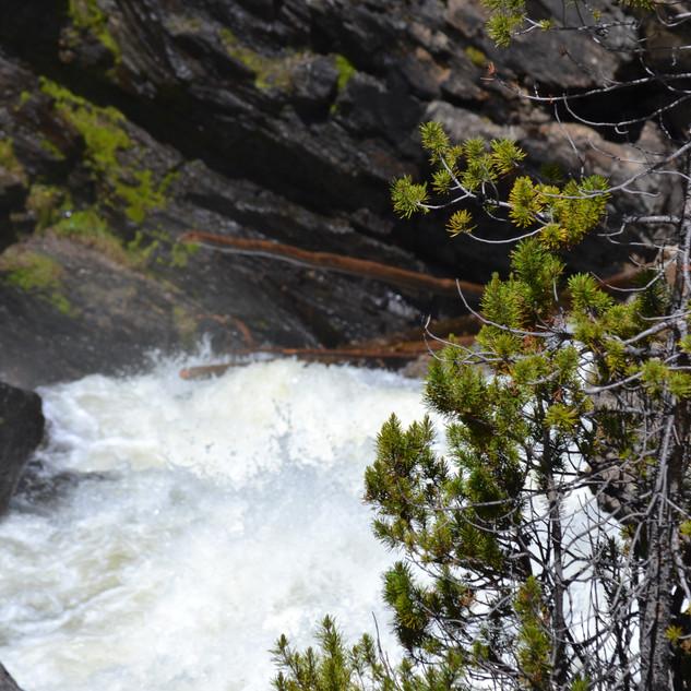 RMNP and Grand Lake - Day One-14.jpg