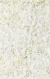 Hydrangea Flower Wall