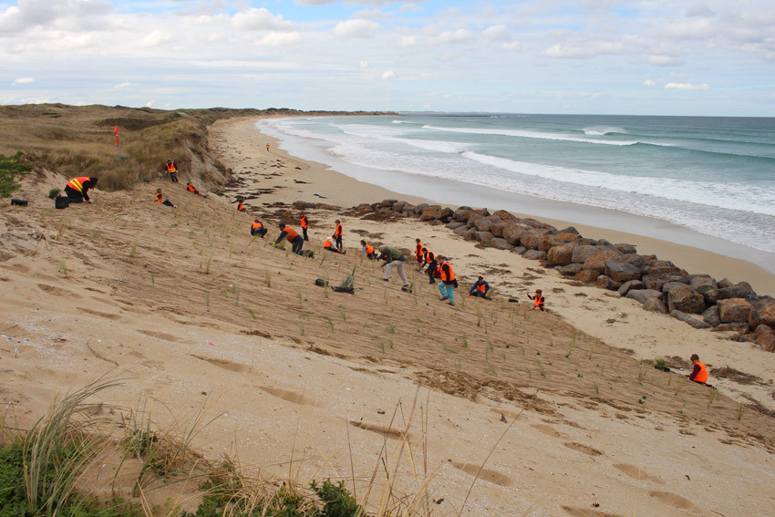 Junior PFCG members plant native coastal grasses to help protect the sand dunes.