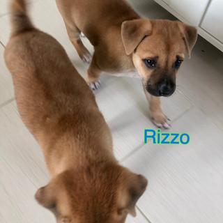 Roxie & Rizzo4 26.10.JPG