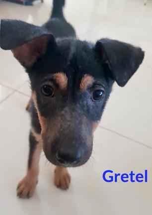Gretel1%2015_edited_edited.jpg