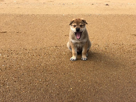 """Is A Tired Dog Really A """"Happy Dog""""?"""