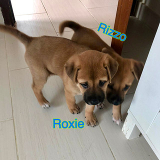 Roxie & Rizzo3 26.10.JPG