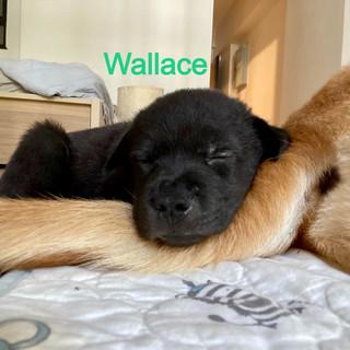 Wallace%2027_edited.jpg