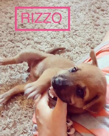 RIZZO 2.JPG