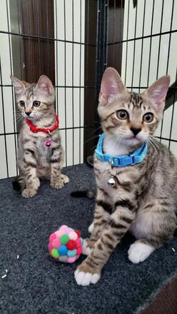 Sophie & Ollie 11.05.jpg