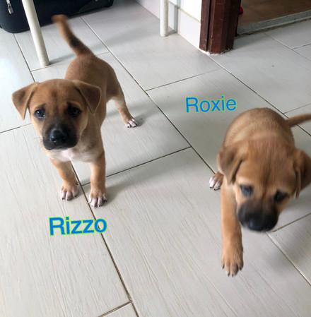 Roxie & Rizzo2 26.10.JPG