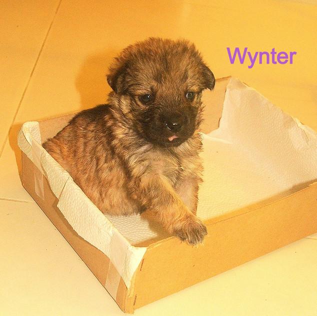 Wynter 26.10.jpg