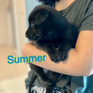 Summer 25.10.JPG
