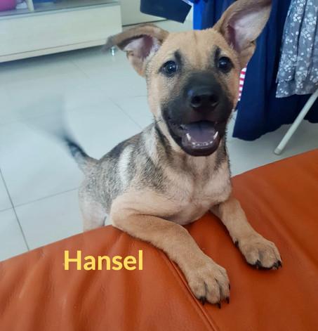 Hansel