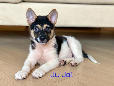 Ju Jai