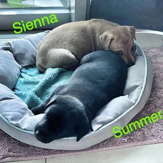 Sienna & Summer 26.10.JPG