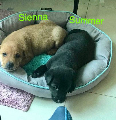 Summer & Sienna 27.10.JPG